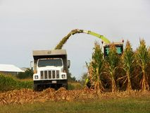 Harvesting Corn. The work has begun of harvesting corn stock images