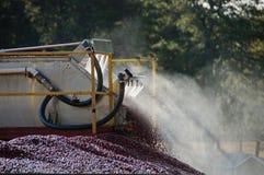 Harvesting cranberry bog Royalty Free Stock Photography