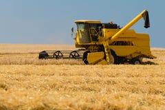 Harvesting crop Royalty Free Stock Photo