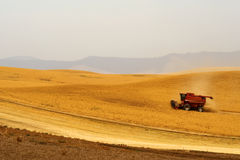 Harvesting crops Royalty Free Stock Photography