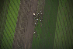 Harvesting Crops from Field Aerial. Aerial perspective of a field during harvest season Stock Image