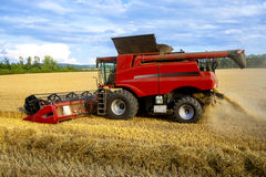 Harvesting crops. Harvester on field harvesting ripe wheat Royalty Free Stock Images