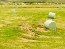 Harvesting cut grass for hay plastic wrapped bales Royalty Free Stock Images