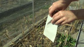 OLOMOUC, CZECH REPUBLIC, SEPTEMBER 2, 2018: Harvesting wheat and grain wheat for scientific research on genetics and