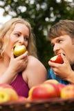 Harvesting - eating apples Royalty Free Stock Image