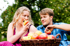 Harvesting - eating apples Stock Image
