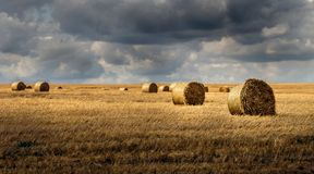 Harvesting at the end of the season. Beautiful yellow shades in combination with a cloudy summer sky Royalty Free Stock Images