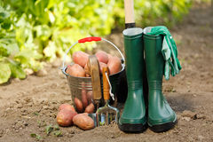 Harvesting equipment and potatoes Stock Photography