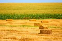 Harvesting in the farmer field Royalty Free Stock Photo