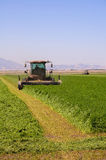 Harvesting a field of alfalfa Royalty Free Stock Photography