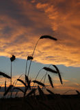 Harvesting field at sunset with dramatic clouds Stock Photos