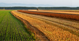 Harvesting on fields of Austria Stock Photography