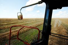 Harvesting Fields of Grain. A combine harvests the swaths of a field of grain on the prairies stock image