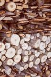 Harvesting firewood Royalty Free Stock Image
