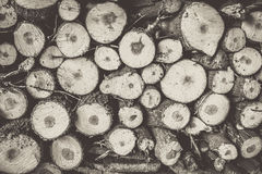 Harvesting firewood Stock Photos