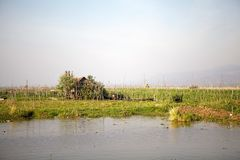 Harvesting among the floating gardens on the Lake Inle Myanmar Stock Photography