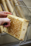Harvesting fresh honey from the bee hive Royalty Free Stock Photos