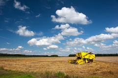 Harvesting grain Royalty Free Stock Images