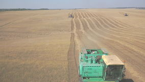 Harvesting grain with a few combines, in a large field. stock video