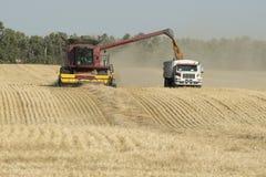 Harvesting Grain Stock Photos