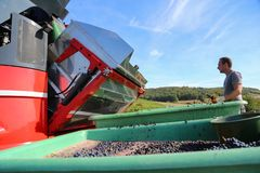 Harvesting of grapes. / Harvesting grapes by a combine harvester Royalty Free Stock Photography