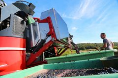 Harvesting of grapes. / Harvesting grapes by a combine harvester Stock Photos