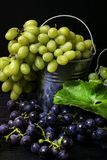 Harvesting grapes for winemaking, on a metal bucket with grapes, still life. Metal bucket with freshly picked grapes, harvest grape, resveratrol royalty free stock photos