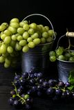 harvesting grapes for winemaking, on a metal bucket with grapes, still life royalty free stock image