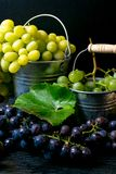 Harvesting grapes for winemaking, on a metal bucket with grapes, still life. Metal bucket with freshly picked grapes, harvest grape, resveratrol royalty free stock image