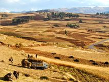 Harvesting hay in the Andes Royalty Free Stock Photos