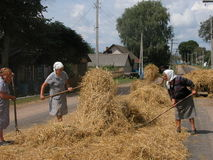 Harvesting hay in the Belarusian village Royalty Free Stock Images