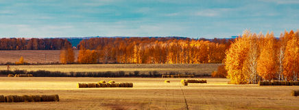 Harvesting hay Stock Images