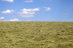 Harvesting hay cut grass drying Stock Photo