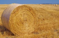 Harvesting hay in the Darling Downs Qld Aust. Stock Photography