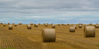 Harvesting of the Hay Fields. Hay bales wait to be collected at harvest time royalty free stock photography
