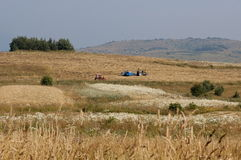 Harvesting hay tractor work on field make haystacks, Plana mountain. Bulgaria Royalty Free Stock Image