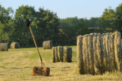 Harvesting hay two Stock Photography