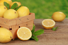 Harvesting lemons Royalty Free Stock Image