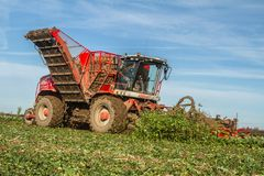 Harvesting and lifting sugar beet in field. Red Vervaet 617 sugarbeet harvester lifting sugar beet harvesting lifting crops in field Stock Images