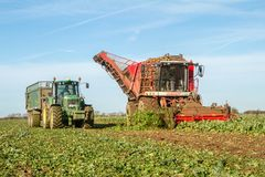 Harvesting and lifting sugar beet in field. Red Vervaet 617 sugarbeet harvester lifting sugar beet harvesting lifting crops in field tipping into trailer Royalty Free Stock Image