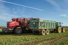 Harvesting and lifting sugar beet in field. Red Vervaet 617 sugarbeet harvester lifting sugar beet harvesting lifting crops in field tipping into trailer Royalty Free Stock Photography