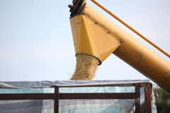 Harvesting machine Royalty Free Stock Photography