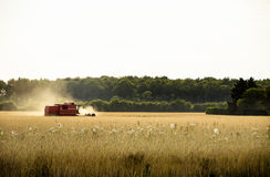 Harvesting machine in the field Royalty Free Stock Photos