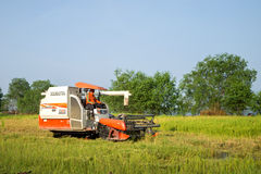 Harvesting machine working in the rice field. Phatthalung ,Thailand - September 20,2015 : A man control harvesting machine  in the rice field beside the lake Stock Image