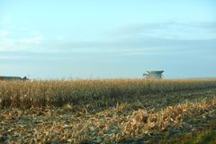 Harvesting maize during a fall evening. With the roof of a combine harvester visible behind rows of dried plants with stubble in the foreground Royalty Free Stock Photos