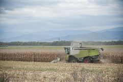 Harvesting of maize grain. On cloudy sky background Royalty Free Stock Images