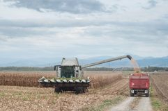 Harvesting of maize grain. On cloudy sky background Royalty Free Stock Photography
