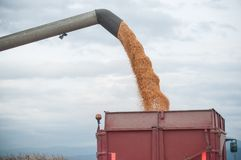 Harvesting of maize grain. On cloudy sky background Stock Photography