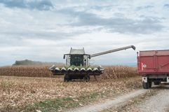 Harvesting of maize grain. On cloudy sky background Stock Photo