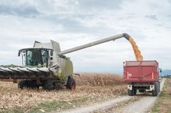 Harvesting of maize grain. On cloudy sky background Royalty Free Stock Photo